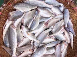 Cá đù tươi 100gr (TẠM HẾT HÀNG)