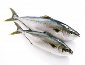 Cá cam tươi Vũng tàu 100gr (1 con <>1kg300gr)